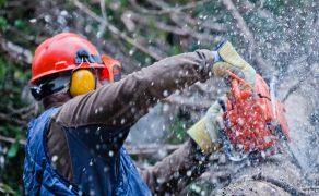 Zagrożenia w leśnictwie